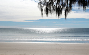 branch, beach, sea, sky, stunner