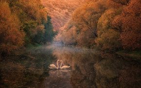 осень, отражение, река, лебеди, природа