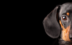 dog, animals, black background