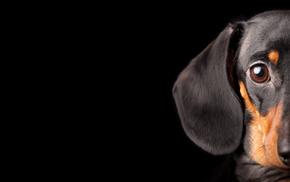 dog, animals, black background
