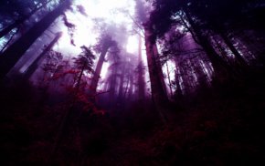 purple, photo manipulation, mist, fantasy art, trees, forest