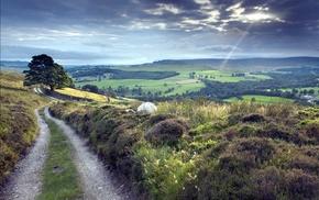 path, dirt road, nature, landscape