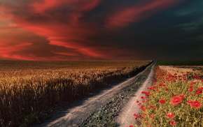 field, poppies, road, stunner, sky