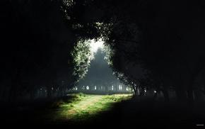 природа, поляна, свет, деревья