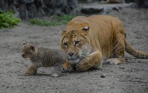 animals, tenderness