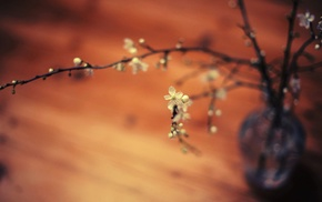 twigs, flowers, macro, depth of field
