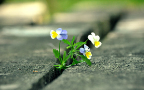 flower, road, macro, city, photo