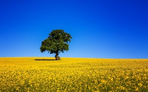 tree, field, nature, sky, beautiful
