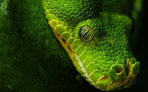 чёрный, животные, зелёный, Змея, глаз
