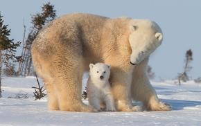 снег, детеныши животных, National Geographic, животные