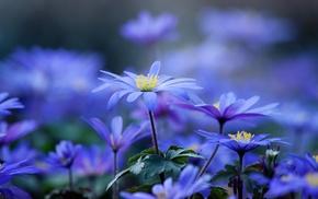 macro, photo, nature, flowers