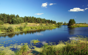 pine trees, summer, nature, river