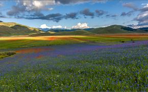 цветы, поле, луг, небо, красивые, горы