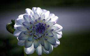 flower, flowers, petals, macro