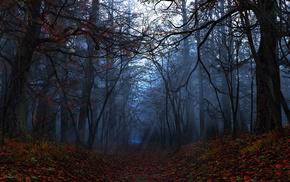 осень, Elegy, листья, лучи, лес, digital