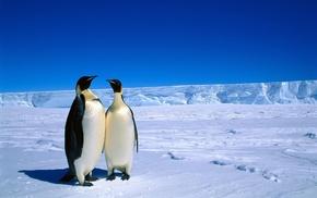 пингвины, антарктика, животные