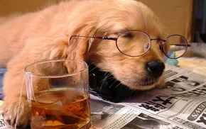 glasses, drink, newspapers, animals, dog