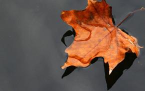 вода, клен, осень, лист