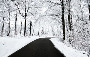 forest, road, snow