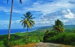 остров Барбадос, красота, небо, зелень, пальмы, природа