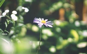 макро, фиолетовый, цветок, цветы, одинок, красиво