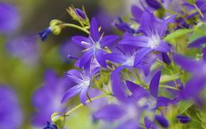 красивые, колокольчики, цветы, колокольчик, красота