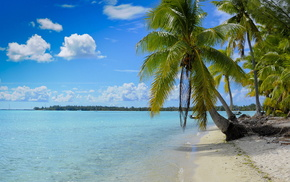 ocean, sky, palm trees, island, coast