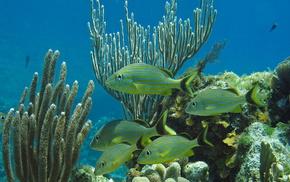 океан, коралловый риф, природа, красота
