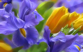 свет, тюльпан, ирис, цветы, природа, клумба