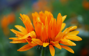 лето, макро, цветы