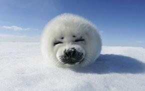 animals, seals