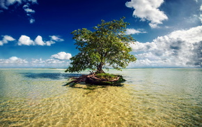 rest, beach, nature, tree, bay