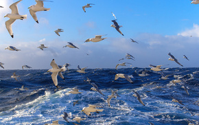 waves, stunner, sea, birds, water