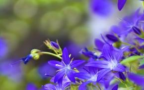 цветы, фон, голубые