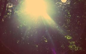 filter, nature