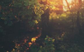 природа, фильтр