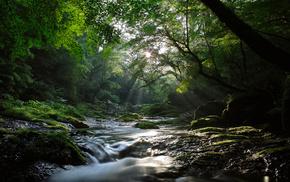 камни, деревья, лето, река, свет, лес