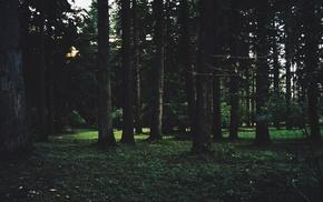 nature, filter