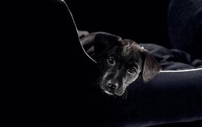 черный пес, черный стул, животные, свет