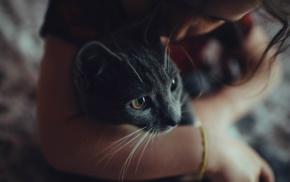 cat, filter