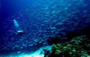 океан, красота, коралловый риф, природа