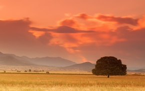 tree, mountain, field, sunset, summer