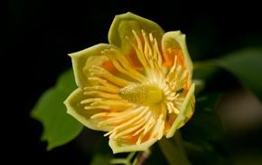 flower, stunner