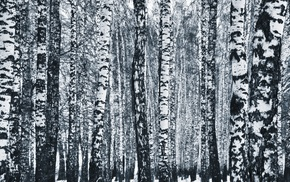 monochrome, birch, Russia, forest, winter, trees
