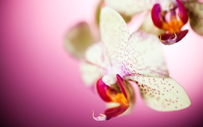 nature, flowers, orchids, macro