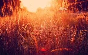природа, фильтр, солнечный свет, трава