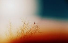 птицы, природа
