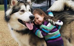 Alaskan Malamute, children, dog