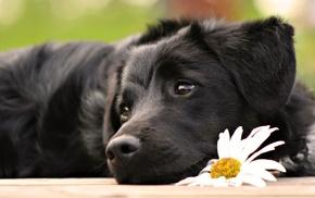 животные, щенки, собака, белые цветы