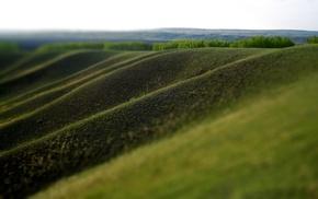 трава, размыто, пейзаж